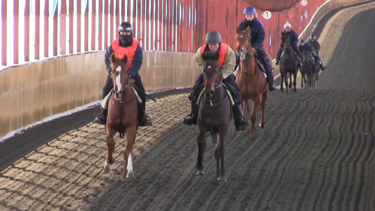 木村牧場 12月の調教風景