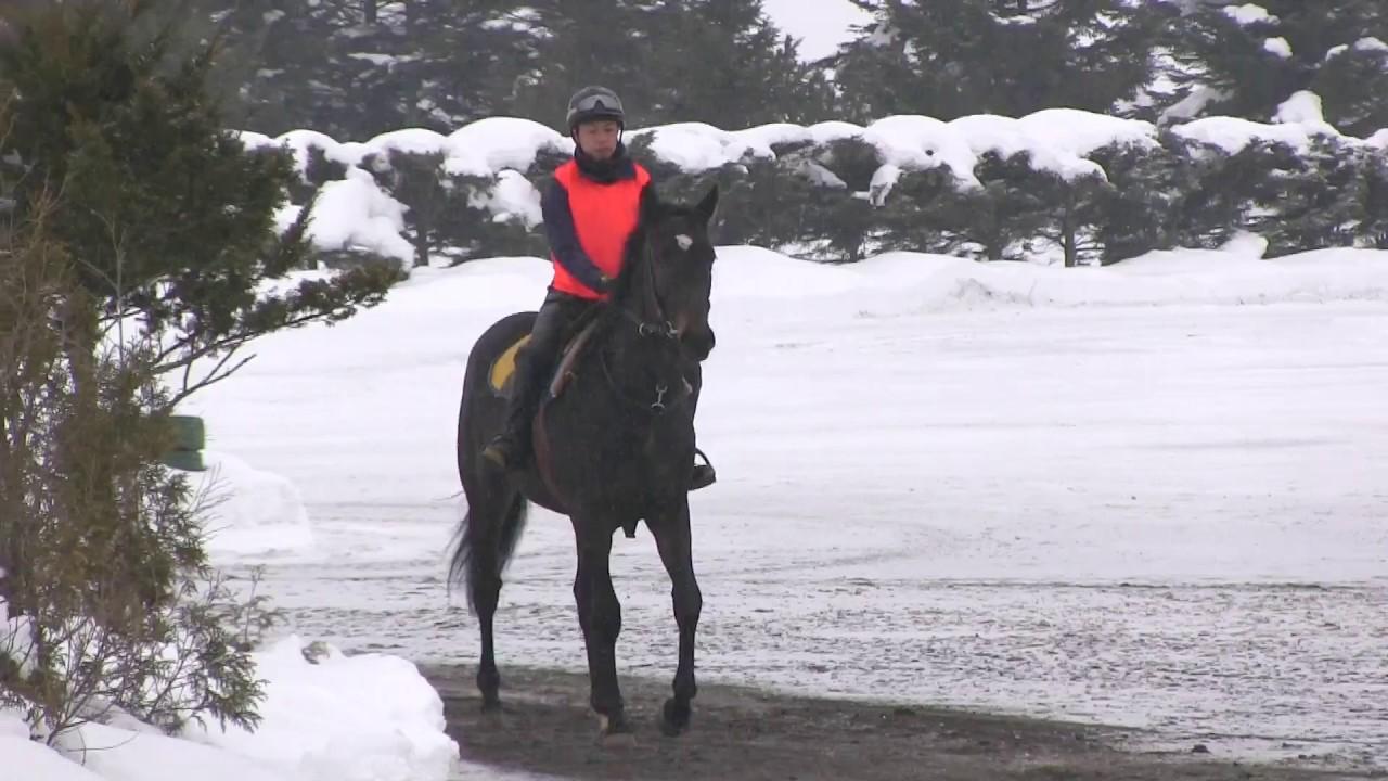 木村牧場 2月の調教風景