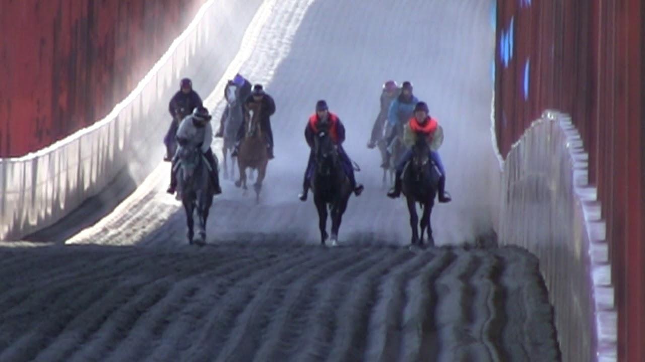 木村牧場 11月の調教風景